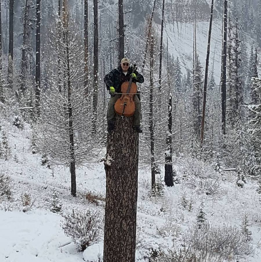 cello on top of a tree
